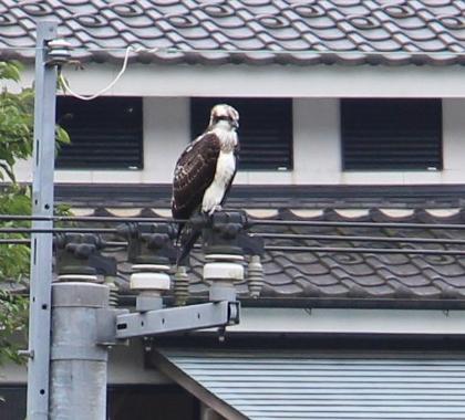佐賀にある、古湯温泉・扇屋さん 鷹