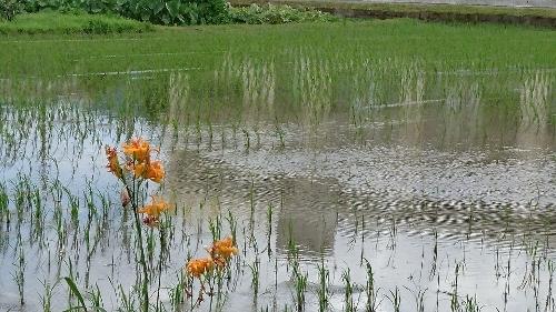 福岡 田んぼのある風景