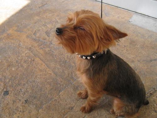 風を感じる犬