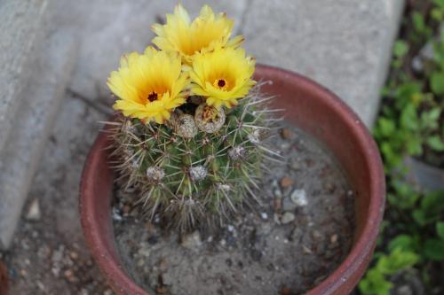 サボテンの花,福岡市,集客,コンサルタント,マーケティング,ホームページ作成