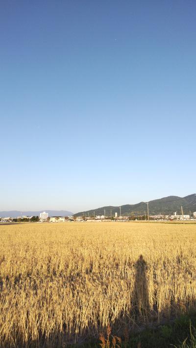 福岡市,集客,コンサルタント,アムプラン,夕日に黄金色に光る麦畑